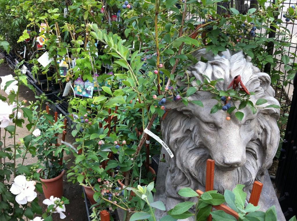 スーパービバホーム豊洲店のガーデンコーナーに置いてあるライオン