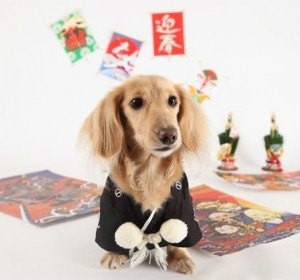 まちなみ公園 新春!開運動物園 3 豊洲マガジン