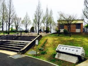 豊洲公園 桜 1 豊洲マガジン