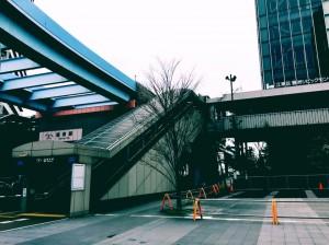 豊洲公園 桜 6 豊洲マガジン