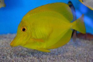 夏のふれあいサンゴ水族館 豊洲まちなみ公園9豊洲マガジン