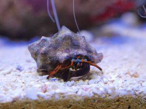 夏のふれあいサンゴ水族館 豊洲まちなみ公園4豊洲マガジン