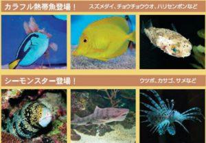 夏のふれあいサンゴ水族館 豊洲まちなみ公園 豊洲マガジン