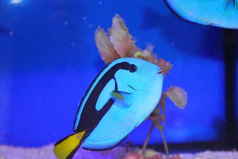 夏のふれあいサンゴ水族館 豊洲まちなみ公園3豊洲マガジン