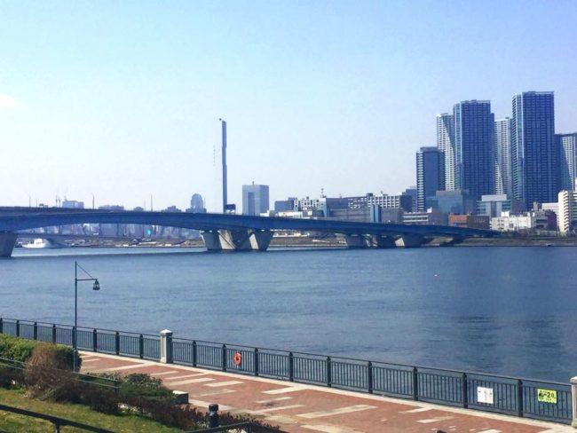 豊洲公園 桜 7 豊洲マガジン